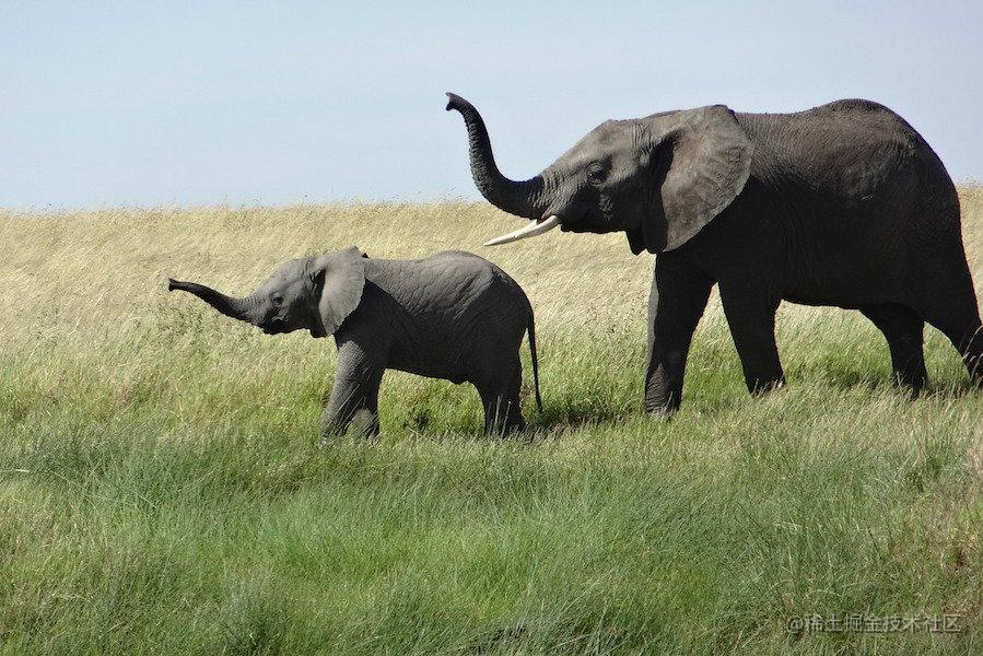 creative_commons_elephant