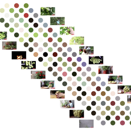 古柳_Deserts_X于2020-11-22 10:17发布的图片